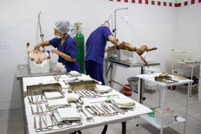 Continua 2° Circuito de Castração de cães e gatos em Boiçucanga