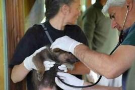 Controlli veterinari. Foto Arch. PNAM