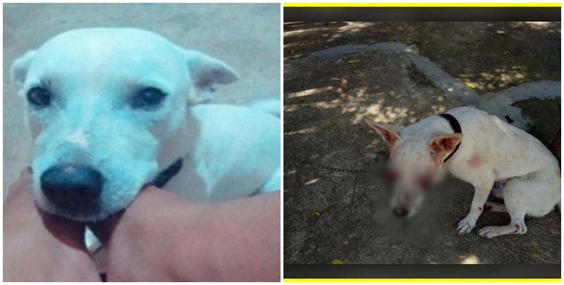 Cão tem os olhos arrancados em cidade do Piauí e caso gera revolta