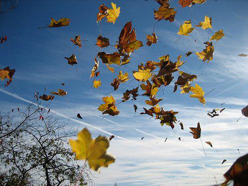 Vent feuilles