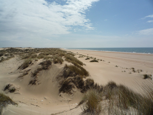 Sanddyner i all oändlighet