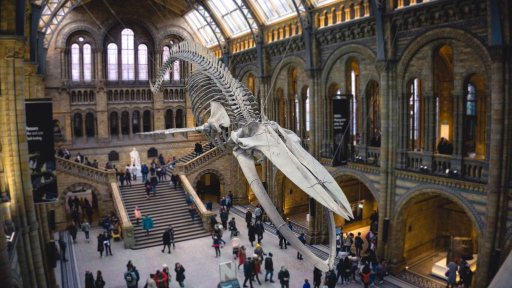 Natural History Museum whale
