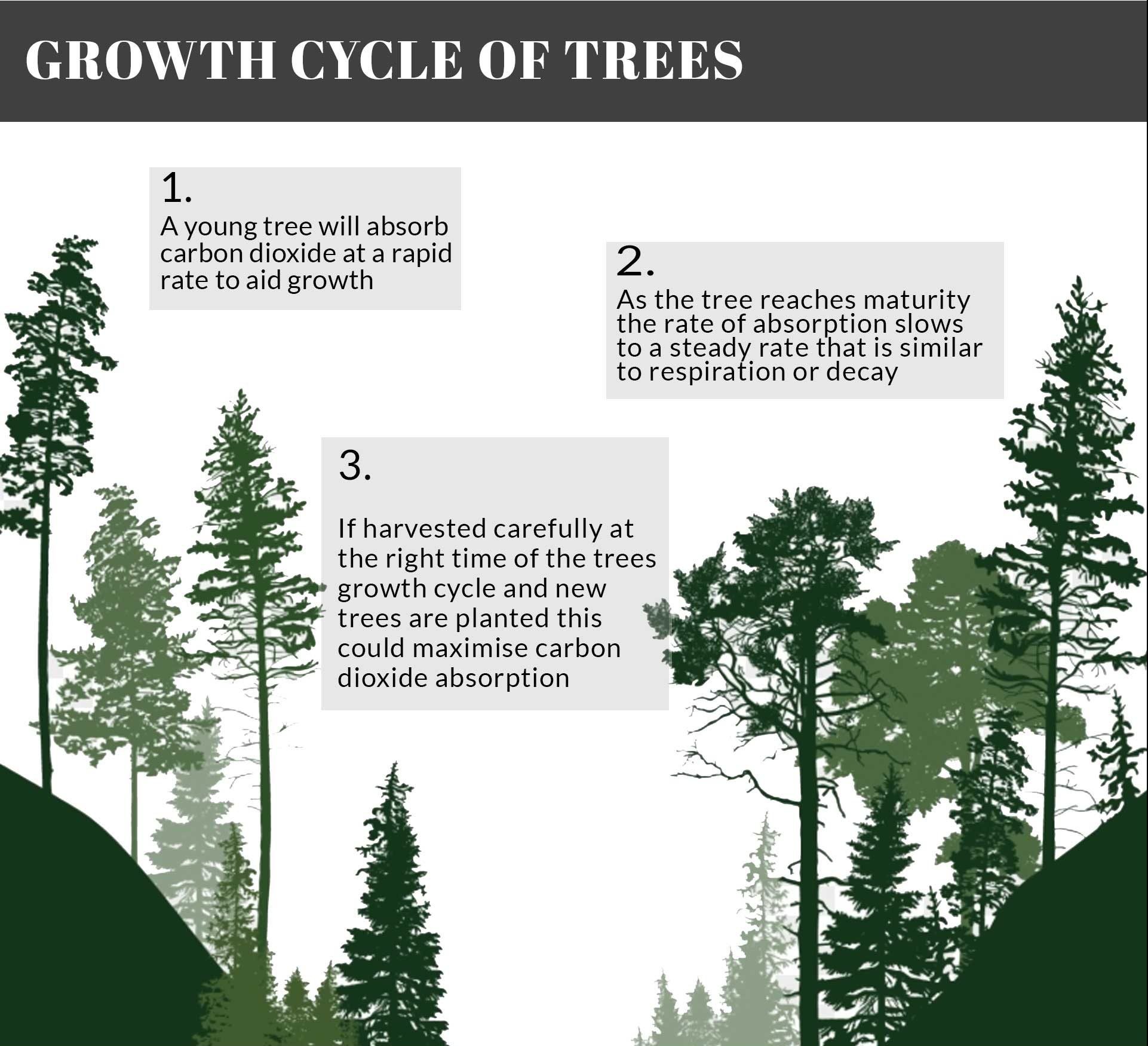 The-growth-cycle-of-trees