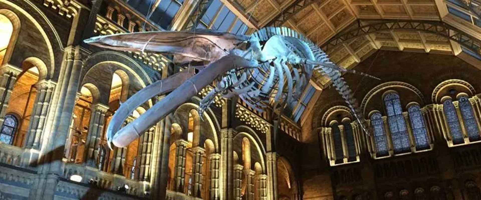 Natural-History-Museum-blue-whale