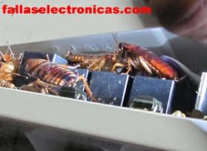 insectos dentro de la tarjeta