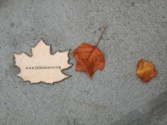 Explanation Leaf, weathering leaves gallery