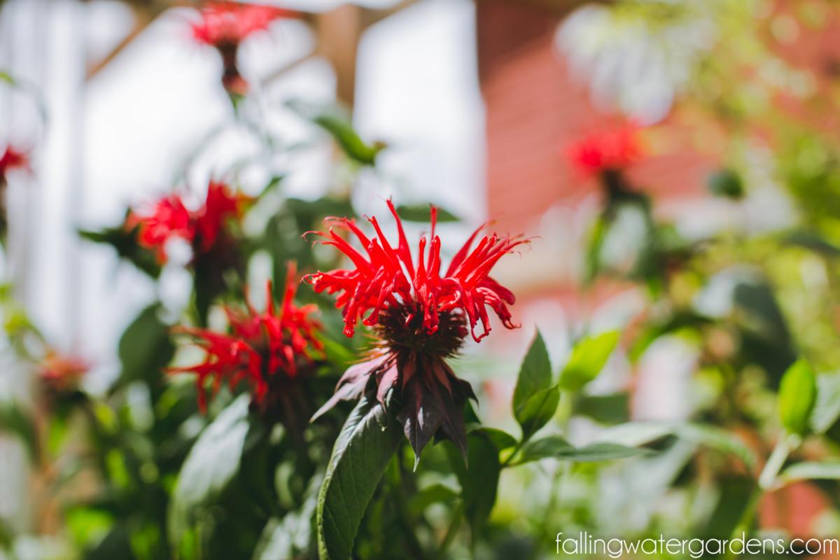 https://i2.wp.com/fallingwaterdesigns.com/plants/wp-content/uploads/2014/05/nursery-garden-center-2.jpg?fit=1200%2C800