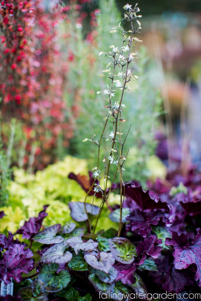 https://i2.wp.com/fallingwaterdesigns.com/plants/wp-content/uploads/2019/10/christmas-decorations-falling-water-gardens-garden-nursery-monroe-2-14.jpg?fit=800%2C1200