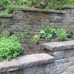 Herbs thriving, especially oregano