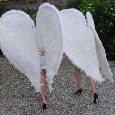 ali angelo retro