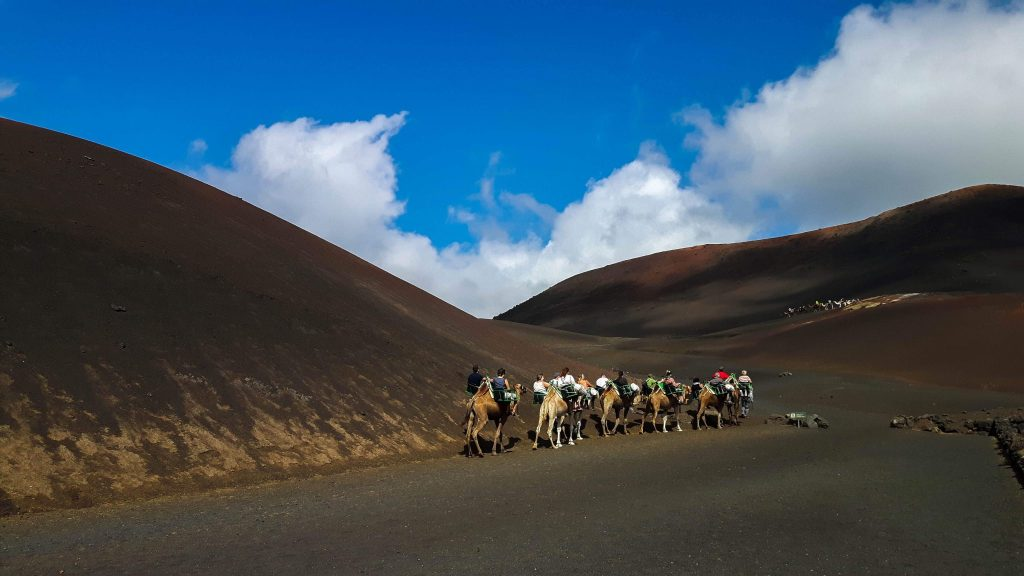 Lanzarote-travel-guide-timanfaya-nationalpark-kamele-reiten-dromedar-karawane-wueste (1 von 1) (1)