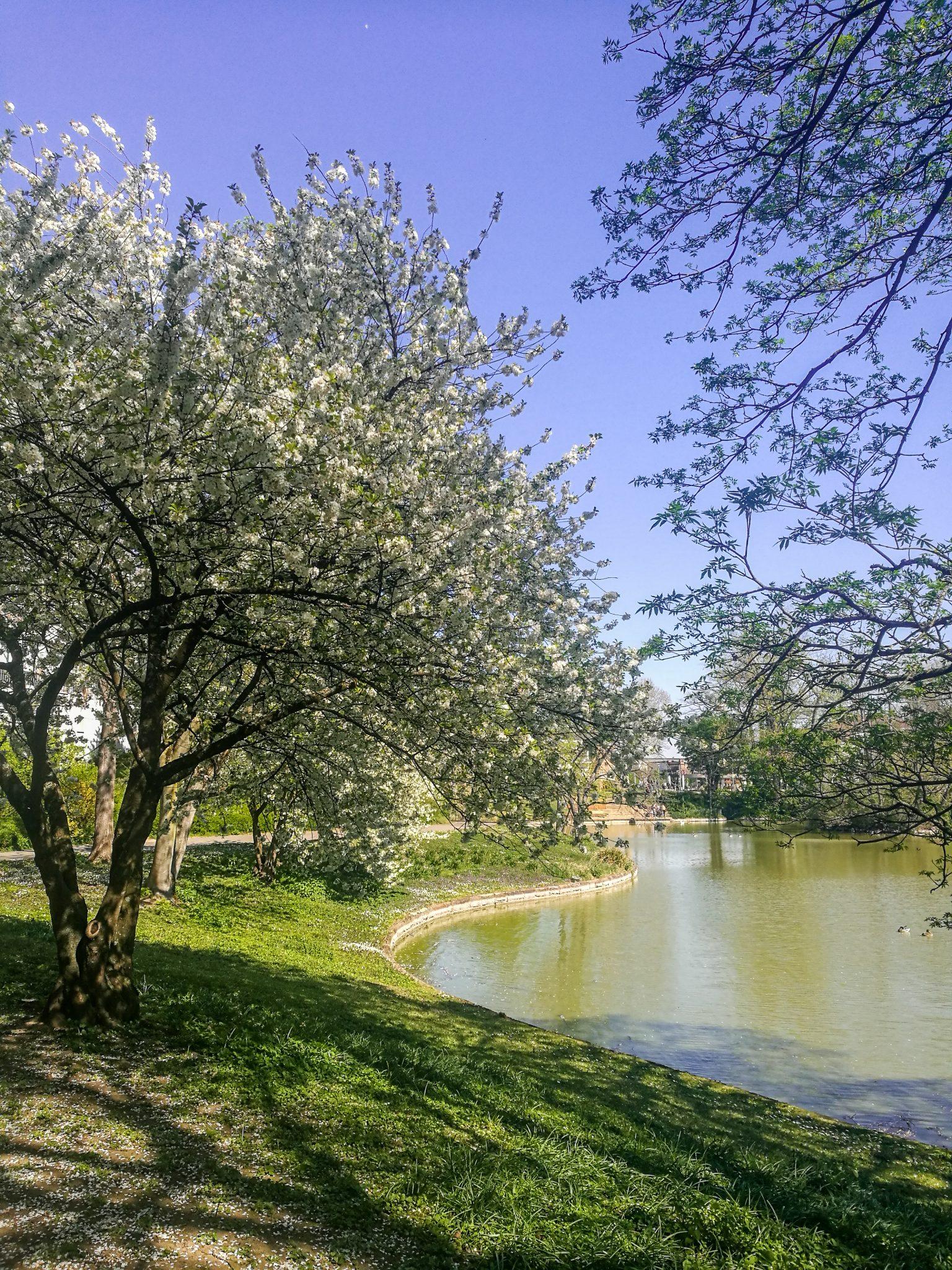 Landau-pfalz-sehenswürdigkeit-schwanenweiher-teich