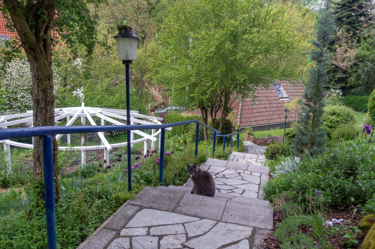 housesitting-guide-kostenlos-wohnen-katze-treppe.