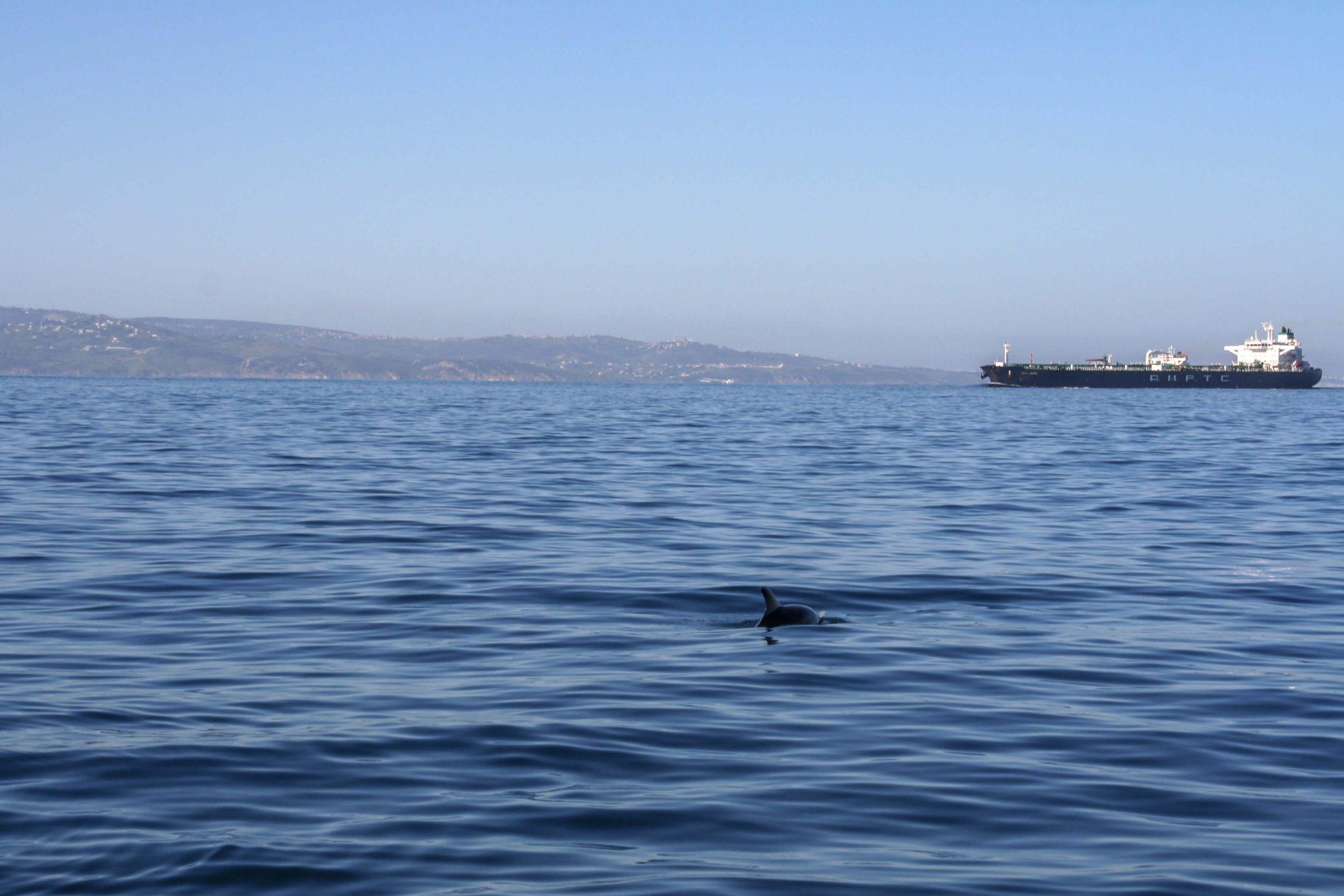 wale-delfine-spanien-whale-watching-tarifa-firmm 09