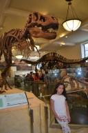 Ala dos dinossauros