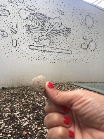 Conchas que formam o sambaqui