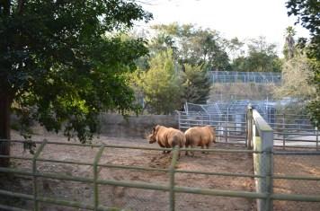 Conservation Station