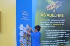 Mundo das Abelhas