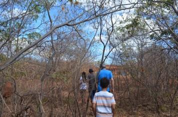 Apicultura na caatinga