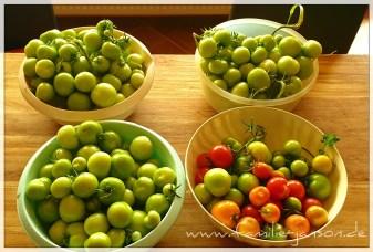 Ein paar Tomaten aus unserer Ernte die wir nachreifen lassen haben.