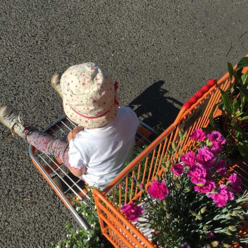 Garten, Blumen, Baumarkt, Kleinkind