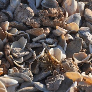 (C) Jule Reiselust: Hübsch anzuschauen, was am Strand alles angespült wird: Muscheln, Korallen, Algen.