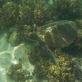 (C) Jule Reiselust: Schildkröte