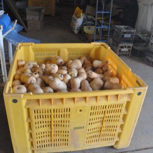 (C) Jule Reiselust: Auf dem Fruit Loop kann man direkt Obst und Gemüse vom Hersteller beziehen.