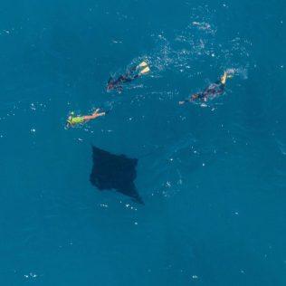 Jule (oben im Bild) schwimmt mit dem Mantarochen in Coral Bay.