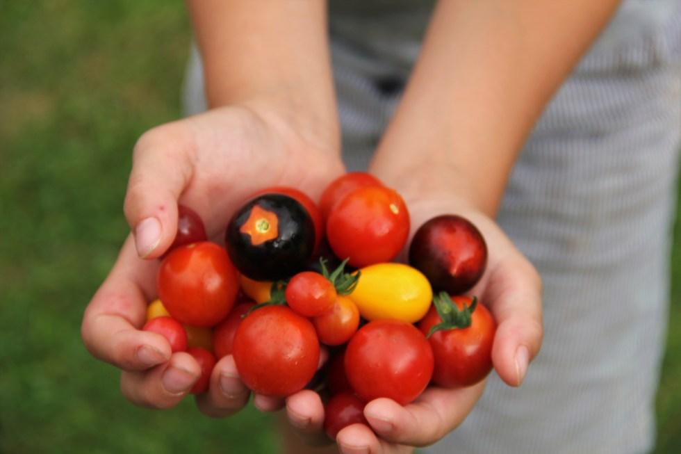 tomatenhand