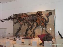 In Toronto und Montréal - Im Royal Ontario Museum
