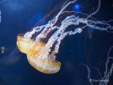 Im Aquarium of the Bay, San Francisco