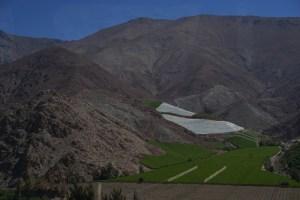 Magisches Pisco Elqui - Sterne, Wein und echte Schätze - Valle de Elqui