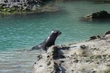Robben am Wharariki Beach