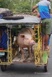 Auf dem Markt in Malatapay