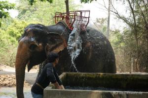 Elefanten, Strand und wilde Affen - Nach der Tour wird geduscht