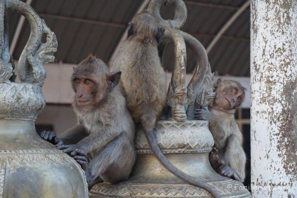 Elefanten, Strand und wilde Affen - Hua Hin