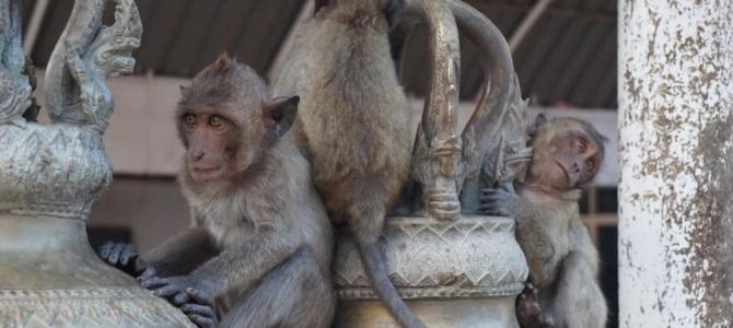 Elefanten, Strand und wilde Affen – Hua Hin