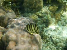Unterwasserwelt vor Malapascua Island