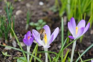 Bienenkuss