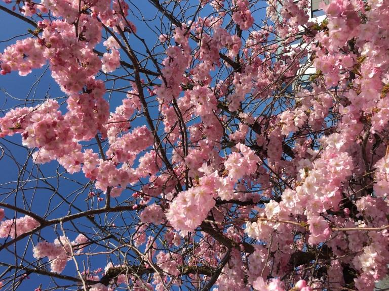 Le printemps partout