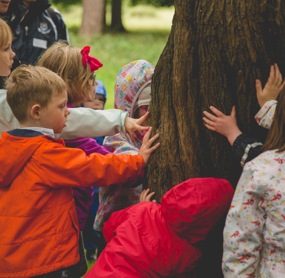 Forest Day – Fairy Tree
