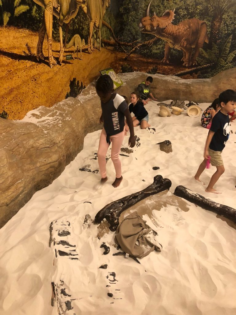 fossil digging at Creative Discovery Museum