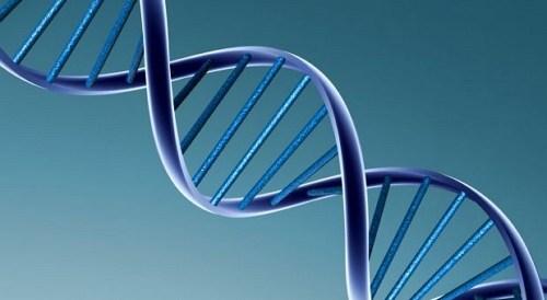 faktor genetik penyebab kelebihan berat badan