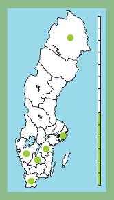 D3c-grenen: Axelsson i Blåvik