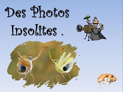 Des photos insolites