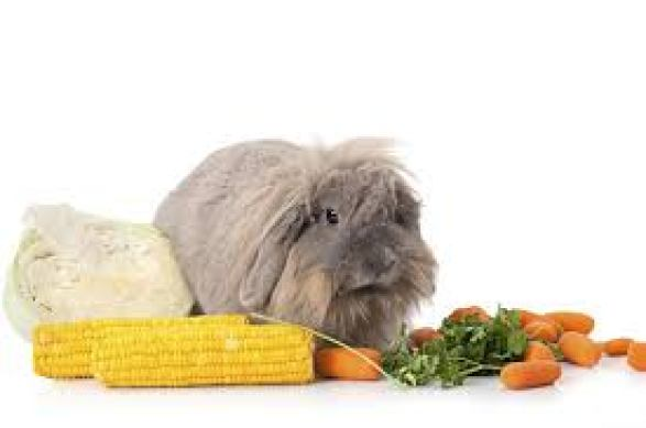angora bunnies eat veggies too