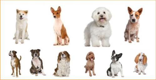 how to pick the right dog for me