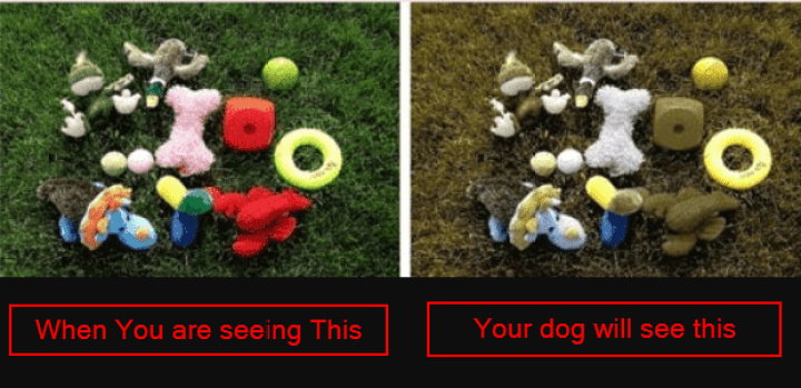 The colors that dogs could see clearly