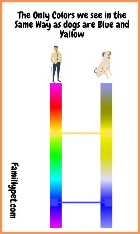 a dog's favorite colour